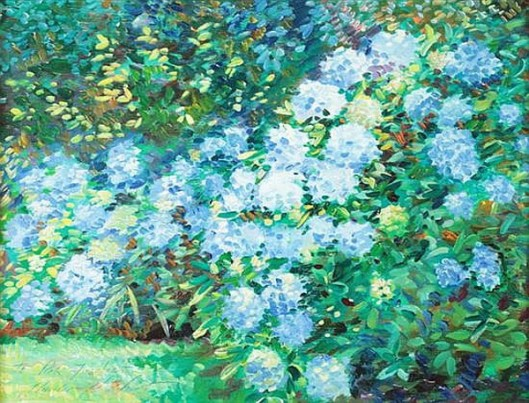 Snowballs (Hydrangeas) In A Garden