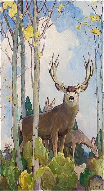 Mule Deer Buck And Doe