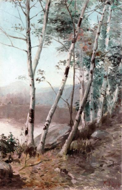 White Birches