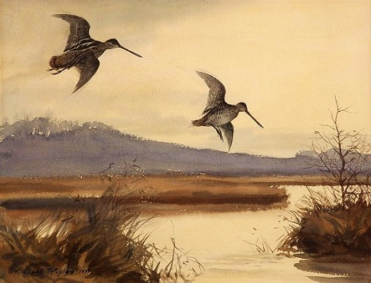 Woodcock In Flight - Pair Of Snipe