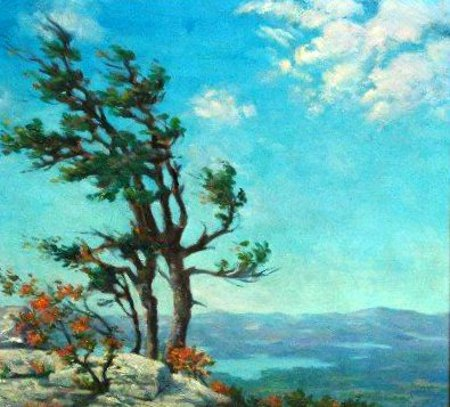 New England Wind Blown Pine