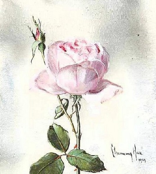 Still Life Of A Pink Rose