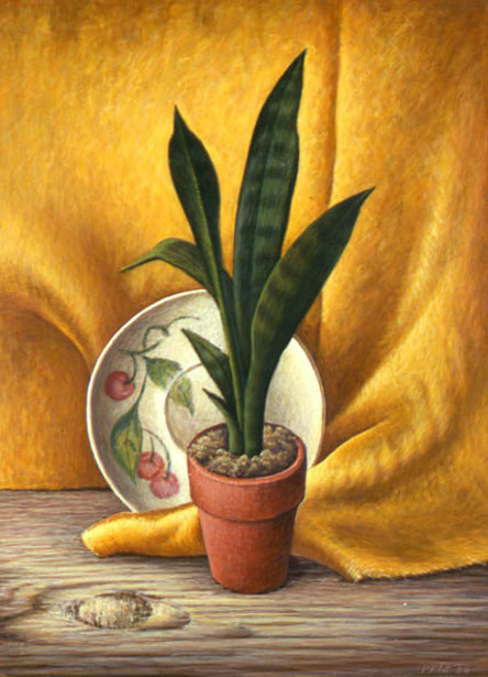Untitled (Still Life With Snake Plant)