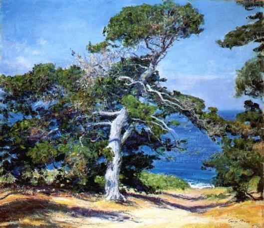 A Carmel Pine