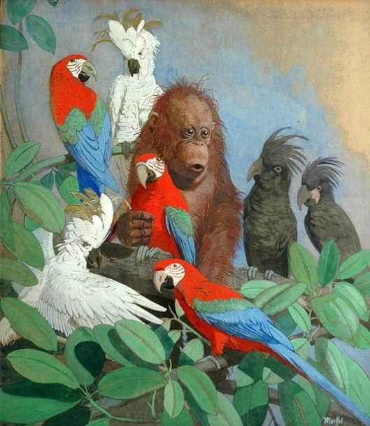 A Baby Orangutan Surrounded By Exotic Birds