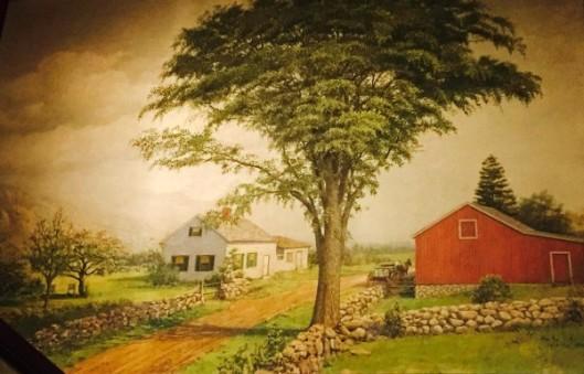 American Elm, Northeastern U.S.A.