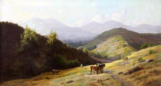 Cattle In The Marin Foothills