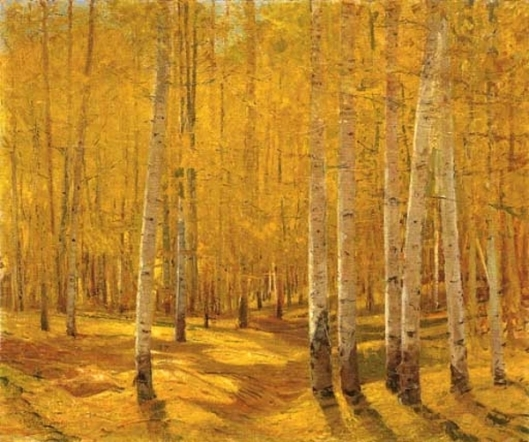 Aspen Forest On Taos Pass