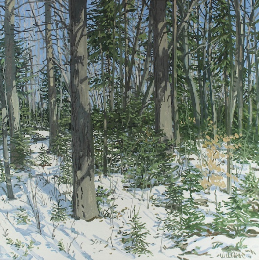 Study For Little Spruce